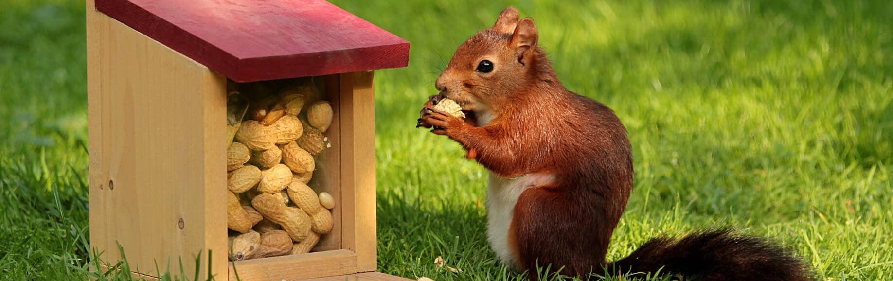 保險松鼠教你從保戶角度釐清自身保險需求
